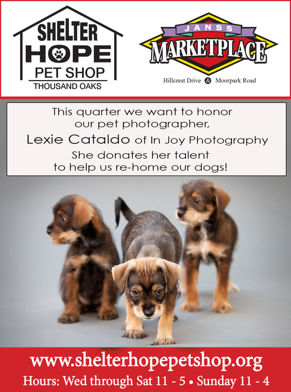 Shelter Hope Ad-Puppies